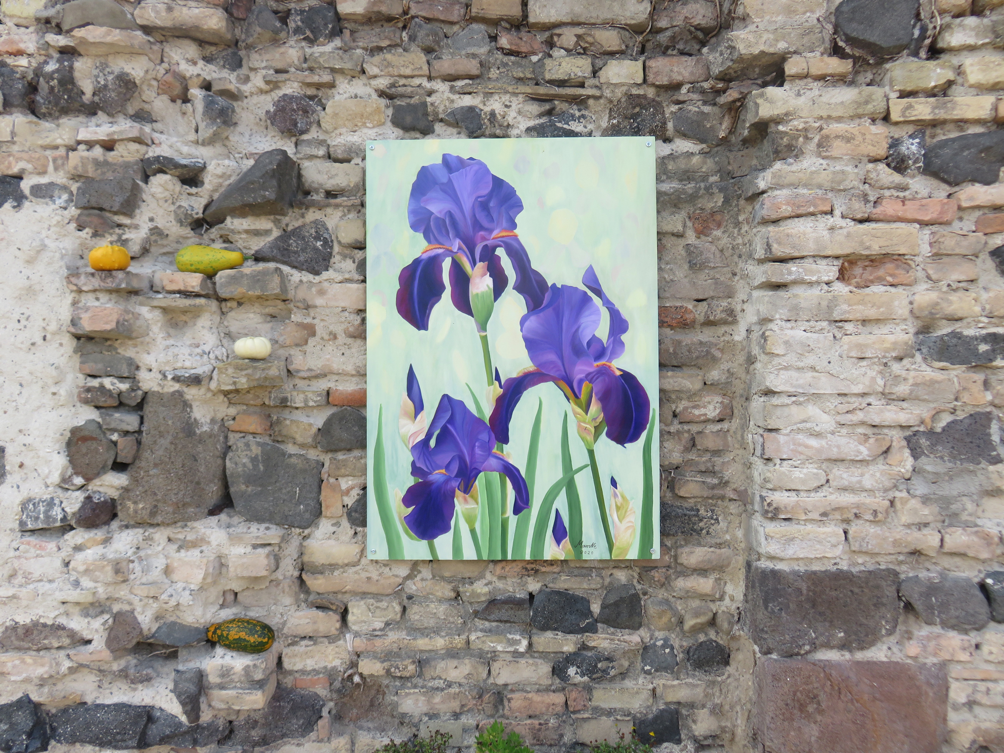 "Marita Brettschneider: Iris germanica   Klostergarten   <a href=""https://www.marne-art.de"" target=""_blank"">www.marne-art.de</a>"